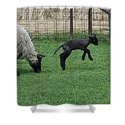 Little Lamb Playing Shower Curtain