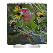 Little Lovebird Shower Curtain
