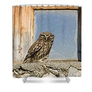 Little Owl Athene Noctua On Window Shower Curtain