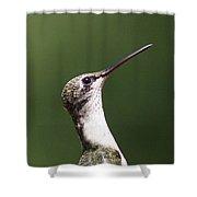 Little Princess - Hummingbird Shower Curtain