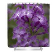 Little Purple Flowers Shower Curtain