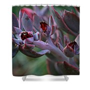 Little Red Blossoms Shower Curtain