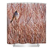 Little Sparrow Shower Curtain