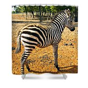 Little Stripes Shower Curtain
