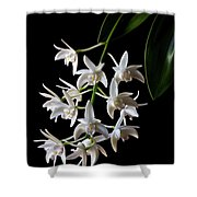 Little White Orchids Shower Curtain