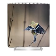 Little Wings Shower Curtain