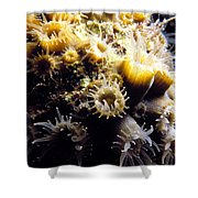 Live Coral Feeding At Night Shower Curtain
