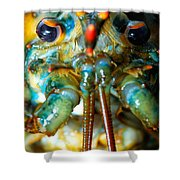 Live New England American Lobsters From Cape Cod Shower Curtain