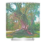 Live Oak On The Teche Shower Curtain