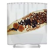 Liver Fluke Lm Shower Curtain