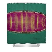 Lm Of An Alga, Surirela Sp Shower Curtain by Eric Grave