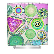 Lm Of Fossilized Diatoms Shower Curtain