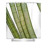 Lm Of Tubular Algae Shower Curtain