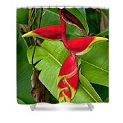 Lobster Claw Heliconia Shower Curtain
