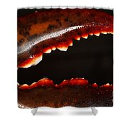 Lobster Claw Shower Curtain