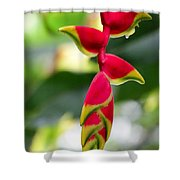 Lobster Claws Shower Curtain