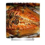 Lobster Mouth Shower Curtain
