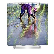 Local Planting Rice By Hand Shower Curtain