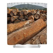 Logged Timber From The Tropical Shower Curtain