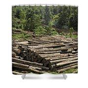 Logs In Logging Area, Danum Valley Shower Curtain