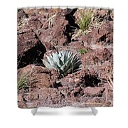 Lone Agave Shower Curtain
