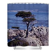 Lone Cypress By The Sea Shower Curtain