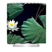 Lone Lily Shower Curtain
