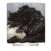 Lone Oak 2 Shower Curtain