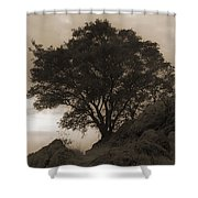 Lone Oak 2 Sepia Shower Curtain