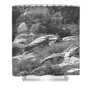 Lone Ram At Red Rock Canyon Shower Curtain