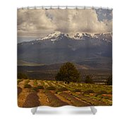 Lone Tree And Lavender Fields Shower Curtain
