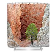 Lone Tree At Bryce National Park Shower Curtain