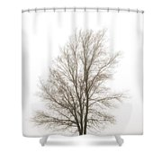Lone Tree In The Mist Shower Curtain
