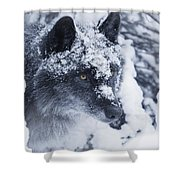 Lone Wolf In Snow Shower Curtain