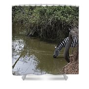 Lone Zebra At The Drinking Hole Shower Curtain