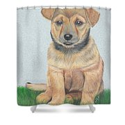 Lonely Dog Shower Curtain