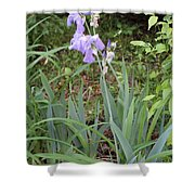 Lonely Gladiola Shower Curtain