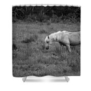 Lonesome Pony Shower Curtain