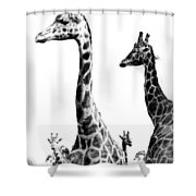 Long And The Short Shower Curtain