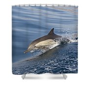 Long-beaked Common Dolphin Delphinus Shower Curtain