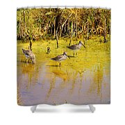 Long Billed Dowitchers Migrating Shower Curtain