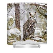 Long Eared Owl Shower Curtain