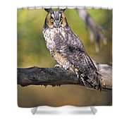 Long Eared Owl On Branch Shower Curtain
