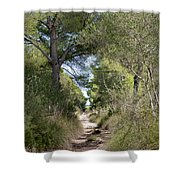 Long Forest Road Shower Curtain