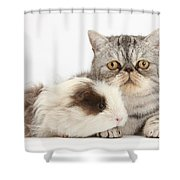 Long-haired Guinea Pig And Silver Tabby Shower Curtain
