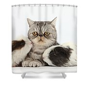 Long-haired Guinea Pigs And Silver Shower Curtain