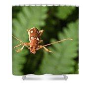 Long-horned Beetle In Flight Shower Curtain