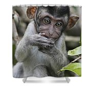 Long-tailed Macaque Macaca Fascicularis Shower Curtain