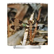 Long Tailed Skimmer 8695 3318 Shower Curtain