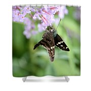 Long Tailed Skipper - Urbanus Proteus Shower Curtain
